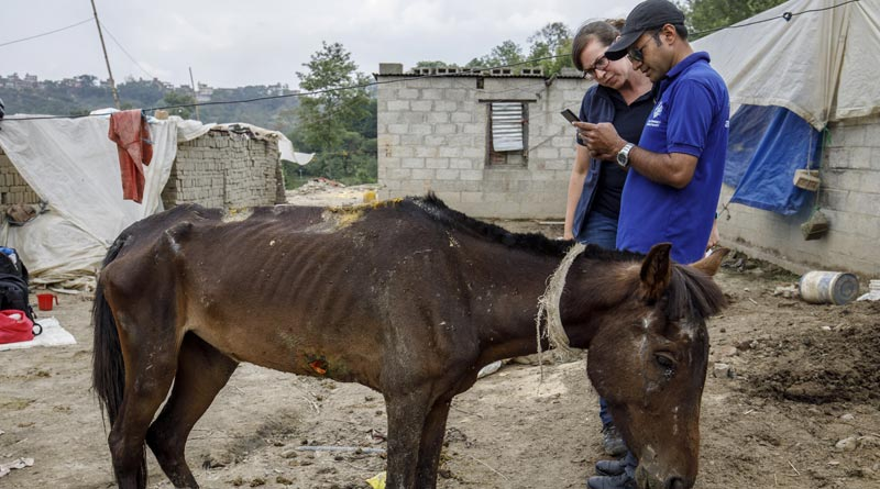A staff member of The Donkey Sanctuary uses thenew 'Equid Assessment Research and Scoping' (EARS) tool, in Nepal.