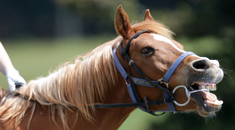 Chestnuts have the most sensitive skin in the horse world, says Jochen Schleese.