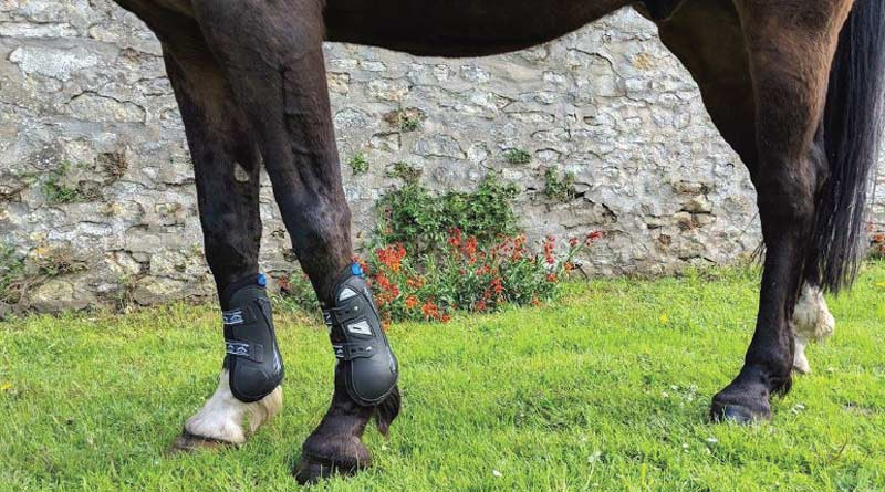 The Ekico tendon boot.