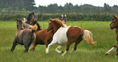 Meeting a horse's basic needs often a balancing act