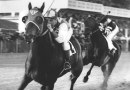 Can Seabiscuit's DNA explain his elite racing ability?