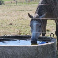 Water key to preventing winter colic in horses
