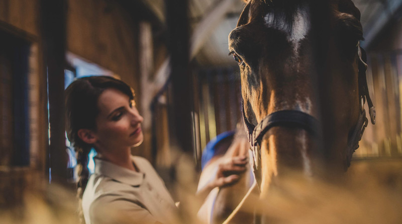 Post University is now enrolling students for its online Bachelor of Science in Equine Studies program for classes starting January 7, 2019.