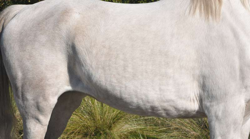 Use winter wisely every year and allow your horse to lose weight naturally, a nutritionist says.