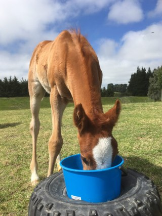 A foal grows from about 10% of its mature body weight at birth to as much as 50% of that weight by the time of weaning.