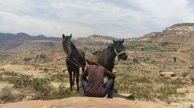 "Working horses taking a break in Lesotho. The International Coalition for Working Equids said the welfare of the horses and donkeys in the community was ""very good""."
