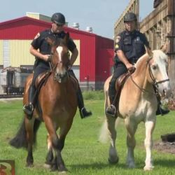 Award-winning police horse once pulled an Amish plough