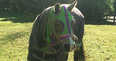 Applying a blanket rule: Are you over-rugging your horse?