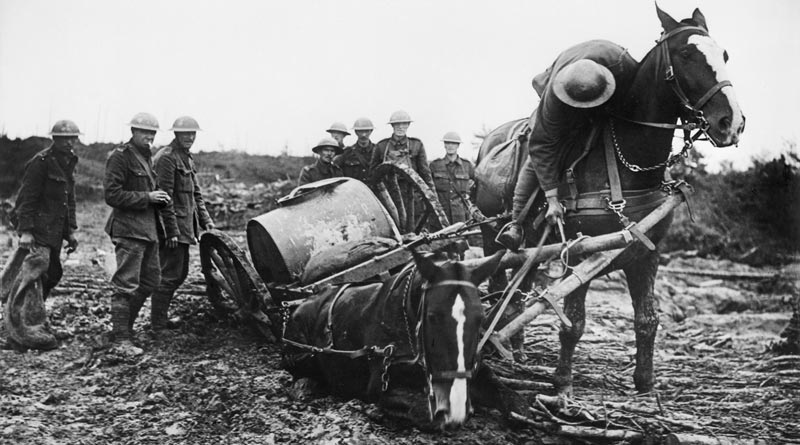 """Historian to reveal the """"real"""" war horses"""