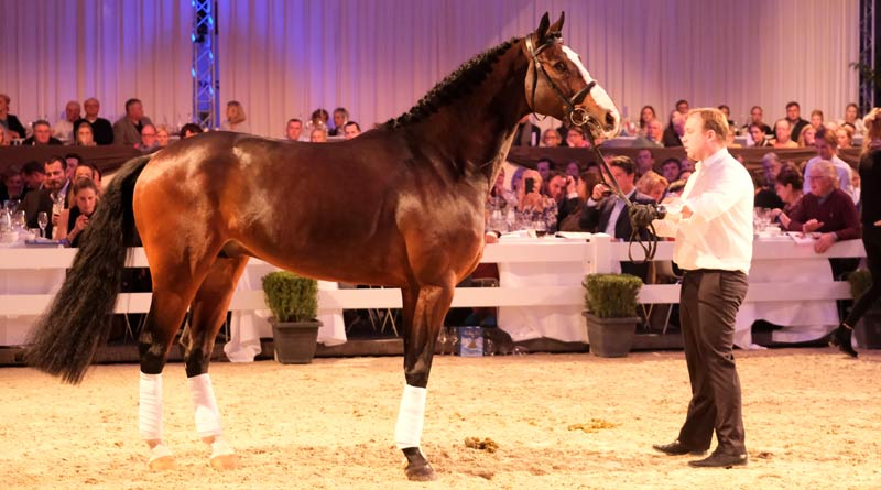 Dacantos fetched €950,000 at auction this week.