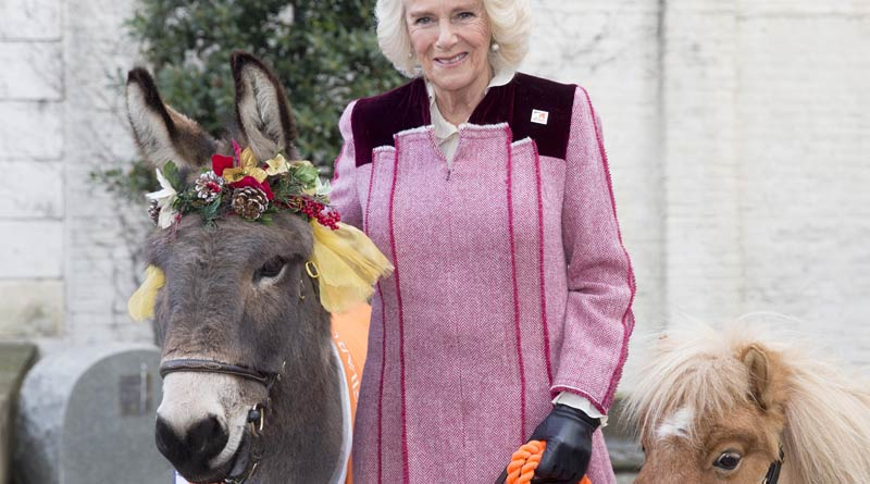 Camilla, theDuchess of Cornwall, with Ollie the donkey and miniature shetland Harry. © Ian Jones