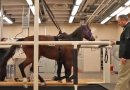 Pioneering lung test for equine breathing disorders