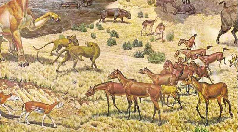 A scene from the Miocene Period as an ancient species of horse, Parahippus, lower right, interacts with other carnivores and herbivores.