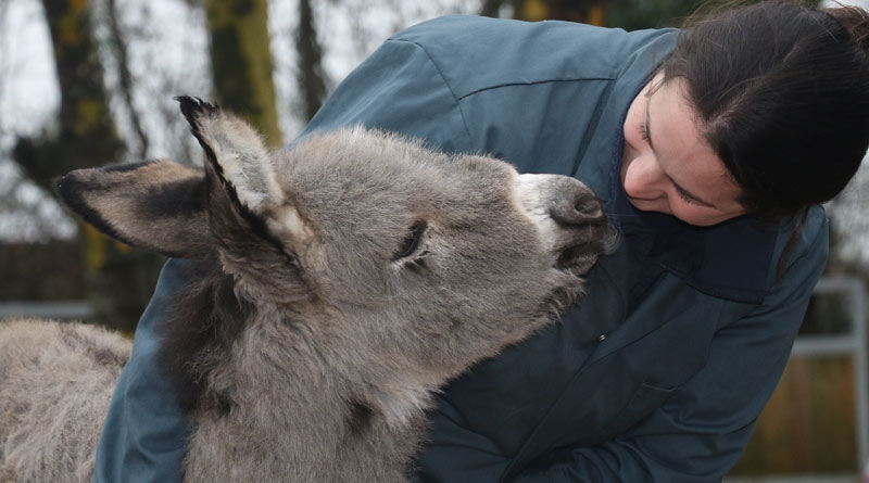 The week-old orphan foal enjoys a momentThe Donkey Sanctuary's new arrivals manager Sara Blair-Salter.