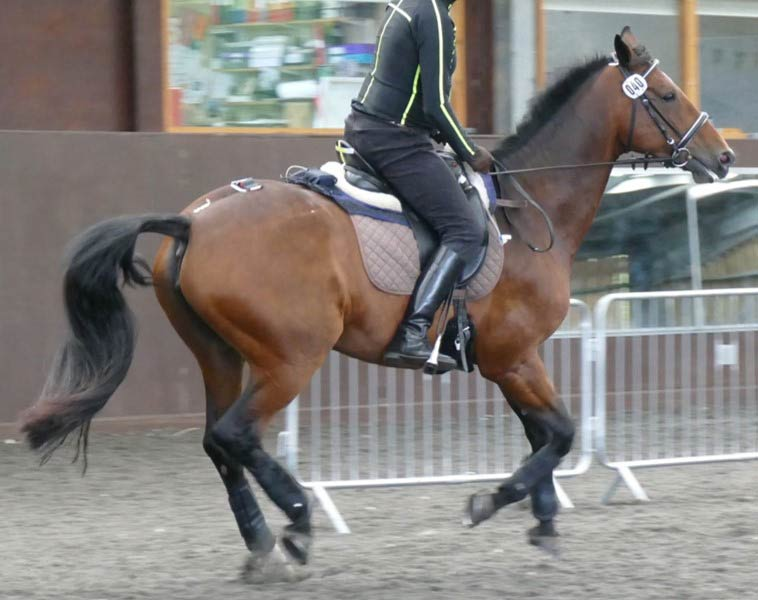 A heavy or tall rider using an unsuitable saddle can have painful consequences for the horse.