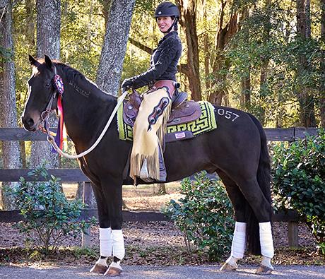 Cobra has excelled in dressage and western dressage with owner Marsha Hartford-Sapp.