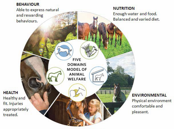 The Five Domains Model of Animal Welfare.