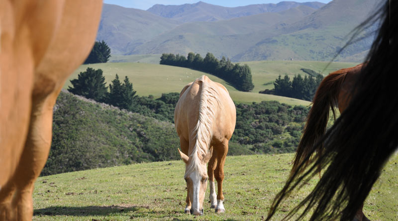 In today's domesticated environment with greater access to forage, hard feed, stabling and rugs, horses and ponies can quickly pile on dangerous excess pounds.