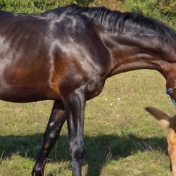 Cancer comparison between horses, humans and dogs pinpoints genetic drug targets
