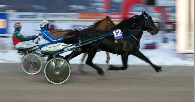 Brains as well as brawn: Mental characteristics linked to trotting ability in Nordic horses