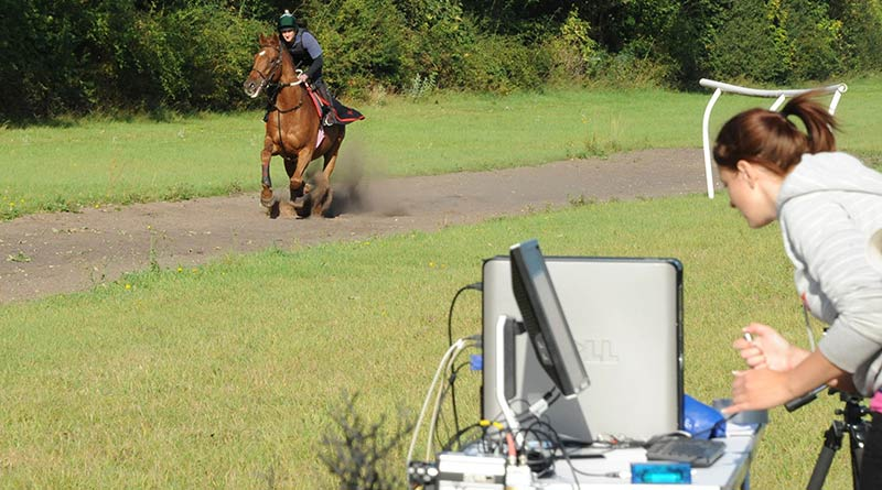 Collecting data from the sensor array as the horse gallops over it.