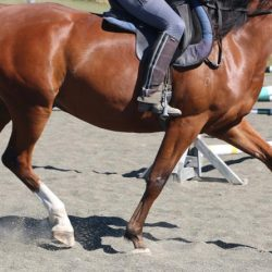 Researchers weigh in with study on the effects of rider weight on horses