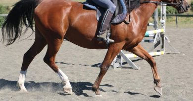Algorithm proves accurate in detecting break-over phase in a horse's stride