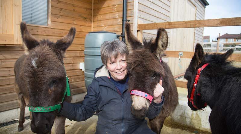 Rehoming hero takes on herd of six mini donkeys - Horsetalk