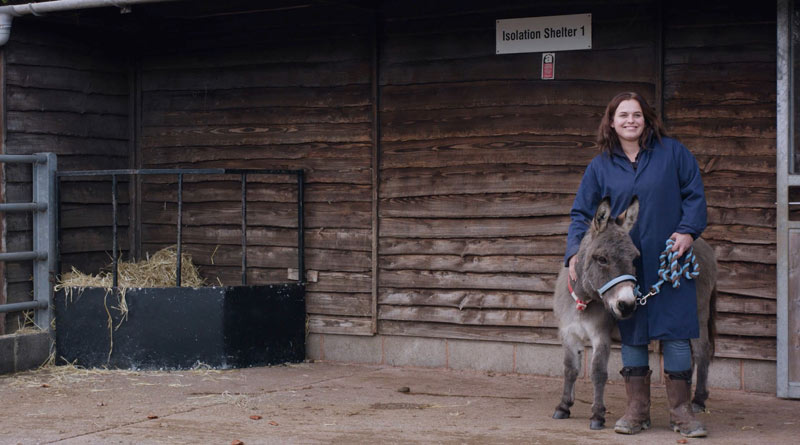 Donkeys stay in the New Arrivals unit for at least six weeks.