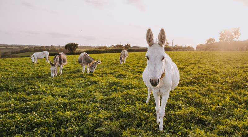 Donkeys used natural shelter relatively more often to shelter from rain and wind, with horses seeking natural shelter relatively more frequently when sunny.