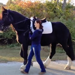 Inspiration from tradition: The science of training horses in-hand