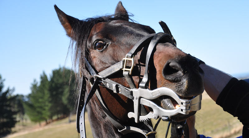 Tighter controls on equine dentistry in NZ proposed