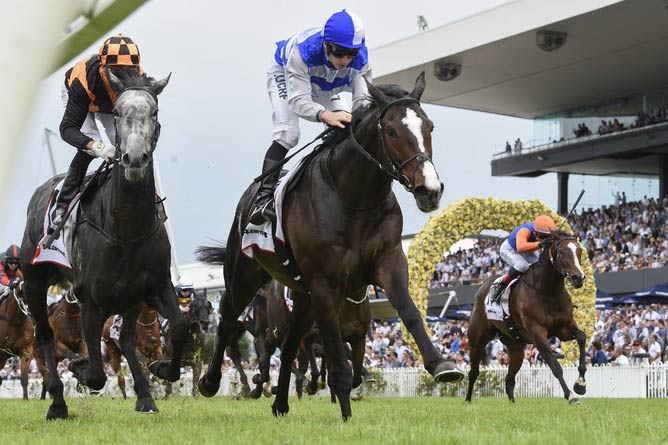 Eminent will line-up in Saturday's Gr.1 Queen Elizabeth Stakes (2000m) at Randwick under the care of Mark Todd.