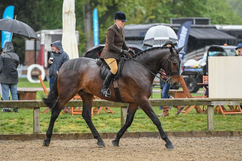 Queen Elizabeth II's Cleveland Bay Lancer was runner-up in the four-year-old ridden hunter class. He was produced and ridden by Katie Jerram-Hunnable.