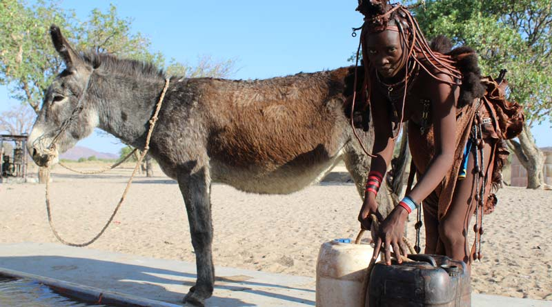 A donkey at work with their owner in Namibia.