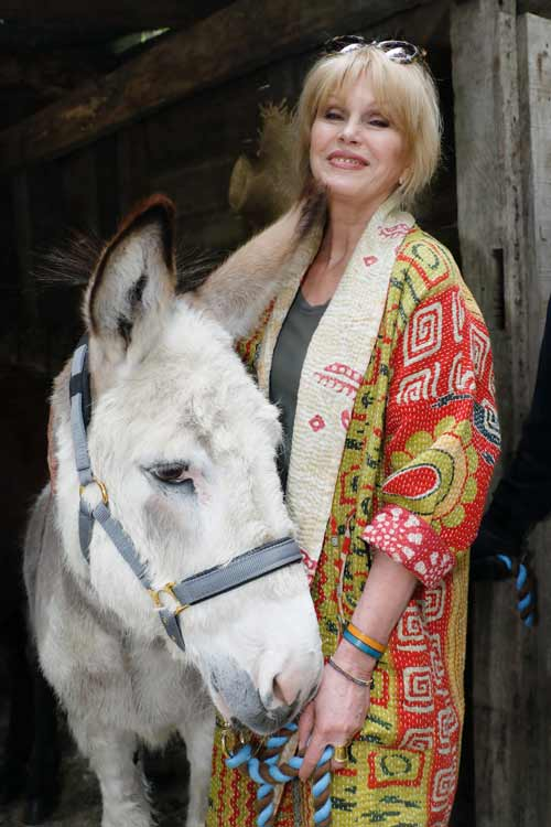 """Joanna Lumley alongside Harley at The Donkey Sanctuary """"Donkey garden"""" bags silvery abide by at Chelsea Flower Show"""