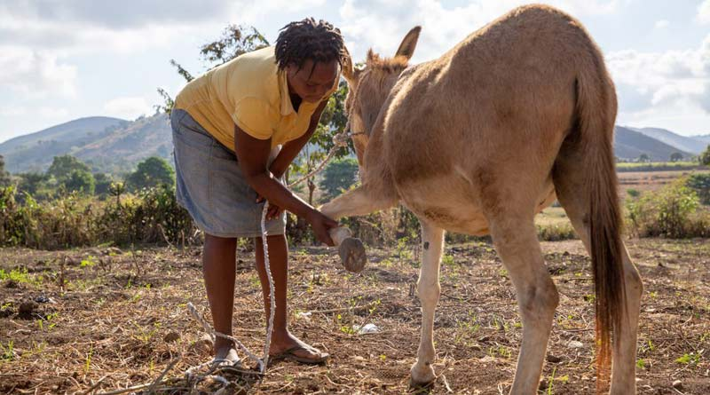 """Equine charity first to try """"match funding"""" for Haiti education project"""