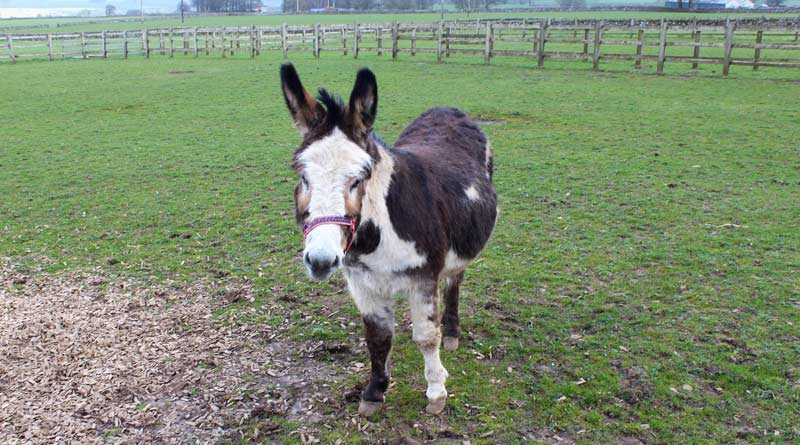 Stuart now has a happier future ahead of him, and it is planned that he will join The Donkey Sanctuary's Rehoming Scheme.
