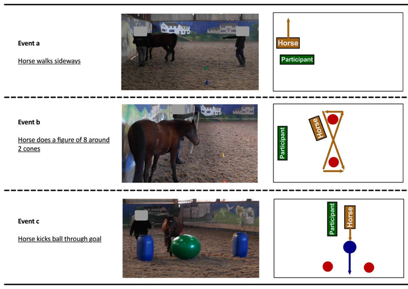 Examples of more advanced manoeuvres with the horse under the direction of the participant.