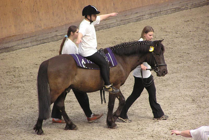 Equine-assisted therapy has been used by medical professionals such as occupational therapists, physical therapists, speech-language pathologists, psychologists, social workers, and recreational therapists.