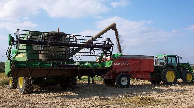 Industrial hemp harvesting in France.