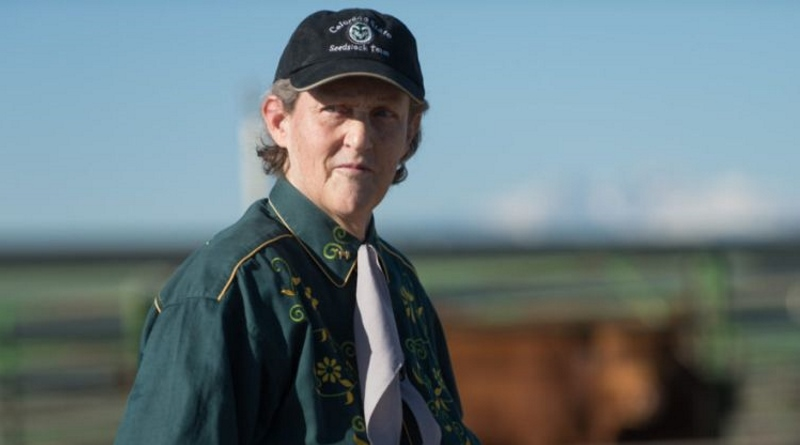 Horses played a crucial role in the personal and career development of Professor Temple Grandin. Photo: Colorado State University