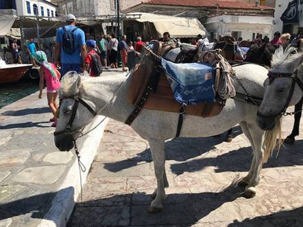 Before the shelters were erected, working equines on Hydra waited in the heat without any shade for their next trip.