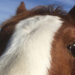 Quarter of horses in study proved to be innovative problem-solvers