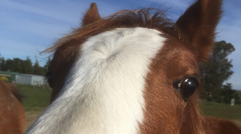 Stable smarts ... The evidence suggests enriched environments create smarter horses.