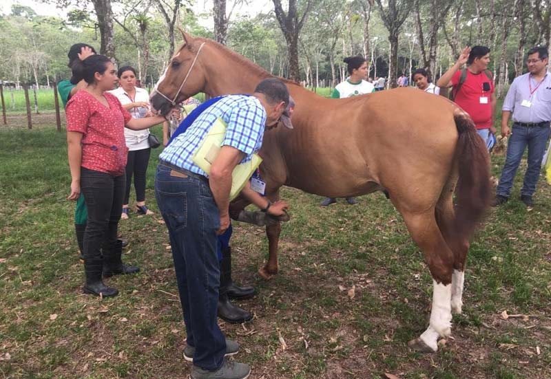 Seminar delegates saw first-hand how charities are helping to reduce equine welfare issues in the Americas.