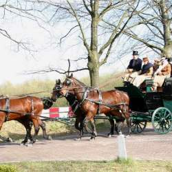 A carriage drawn by Cleveland Bay horses in the Netherlands. Photo: LesMeloures CC BY-SA 2.5