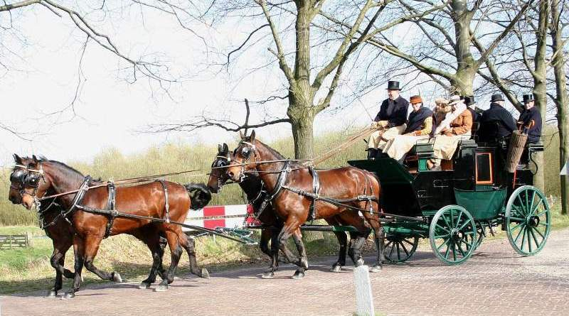 A carriage drawn by Cleveland Bay horses in The Netherlands.