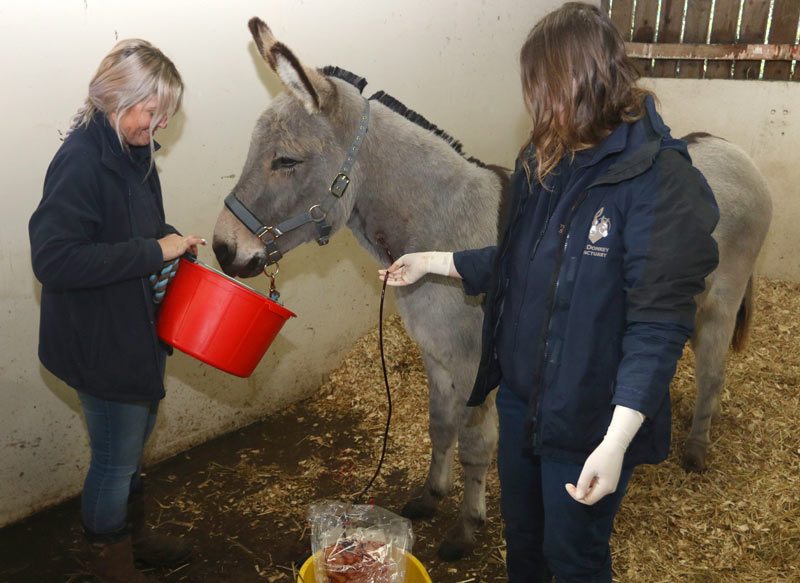 Blood brothers: Equine charity creates its own plasma bank