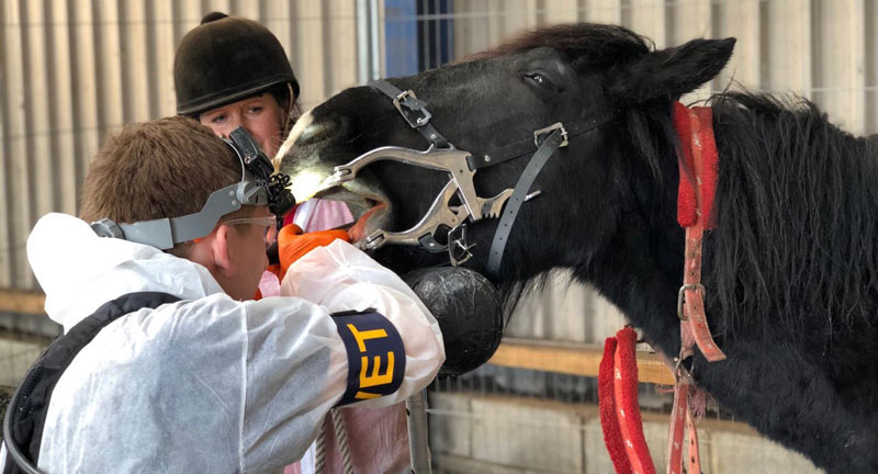 The BEVA Trust and its partners run clinics that provide dental care, farriery, worming, microchipping, and castration services for horses.